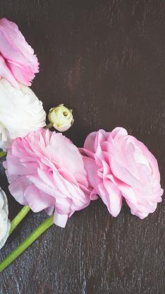 鲜花 玫瑰 植物 花季