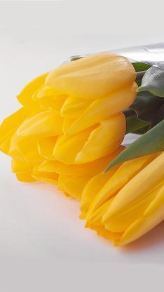 郁金香 鲜花 金黄 盛开