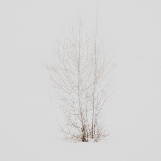 雪地 洁白 枯树枝 植物