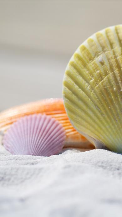沙滩 贝壳 黄色 紫色 橙色