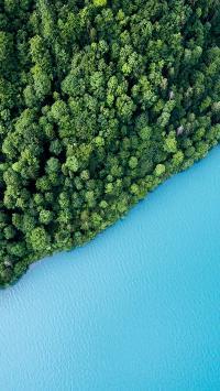 岸边 植物 树林 风景