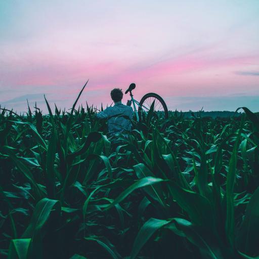 玉米地 绿色 男孩 单车 自行车 背影