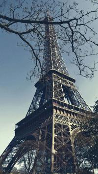巴黎 铁塔 天空 树枝