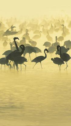 鹤群 动物 河水 动物