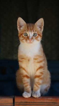 猫咪 乖巧 动物 宠物