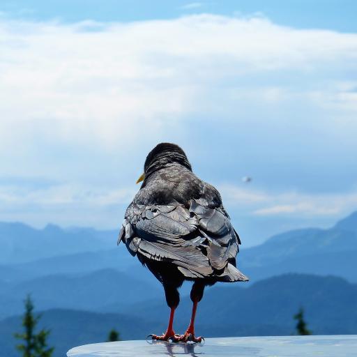 鸟 栖息 羽毛 翅膀 背影 山