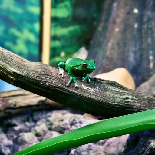 树蛙 绿色 花瓣 青蛙