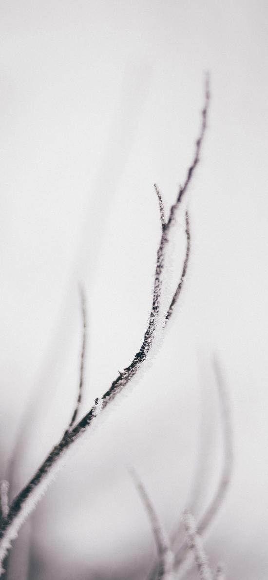 树枝 枯枝 白雪覆盖 意境