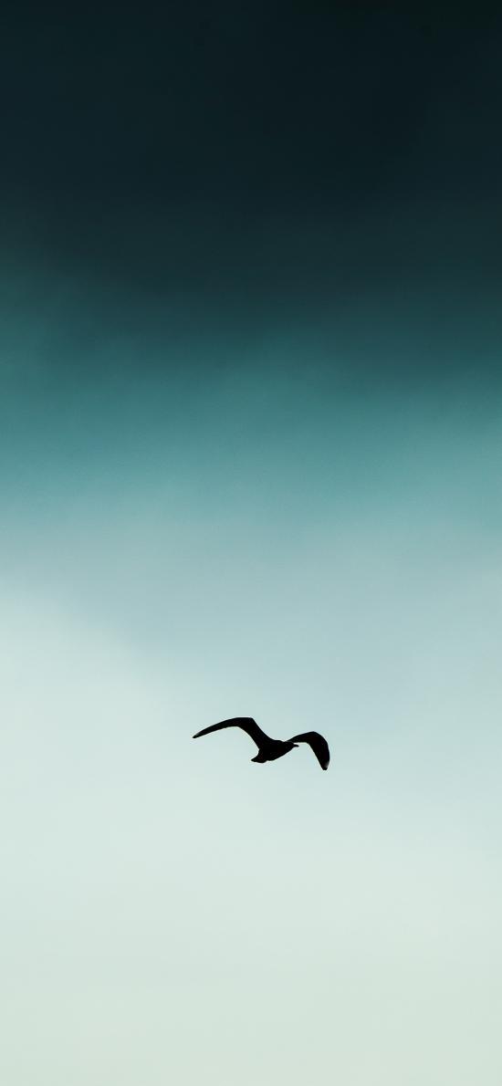 飞翔 鸟 翅膀 天空 翱翔 渐变