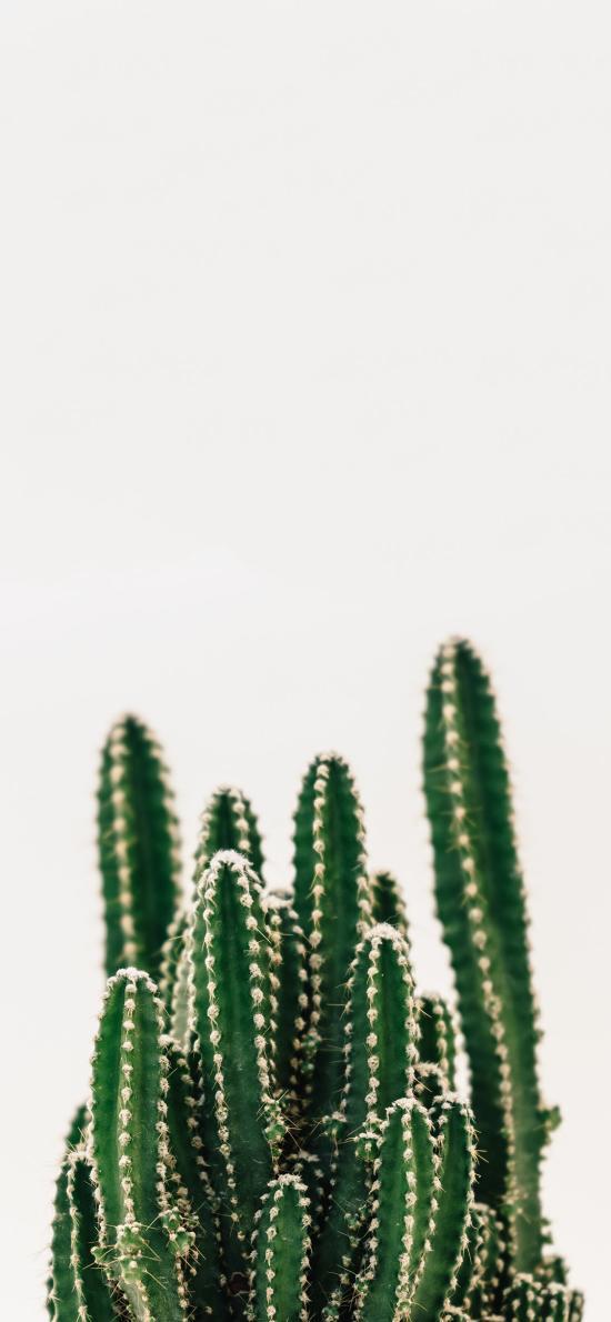仙人掌 绿化 防辐射