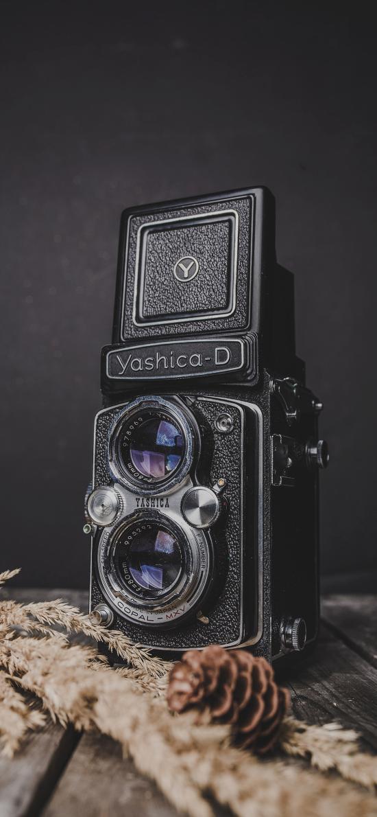 相机 复古 创意 黑 松果