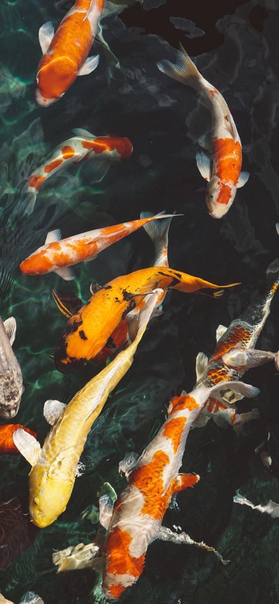 水池 鱼群 锦鲤 观赏鱼