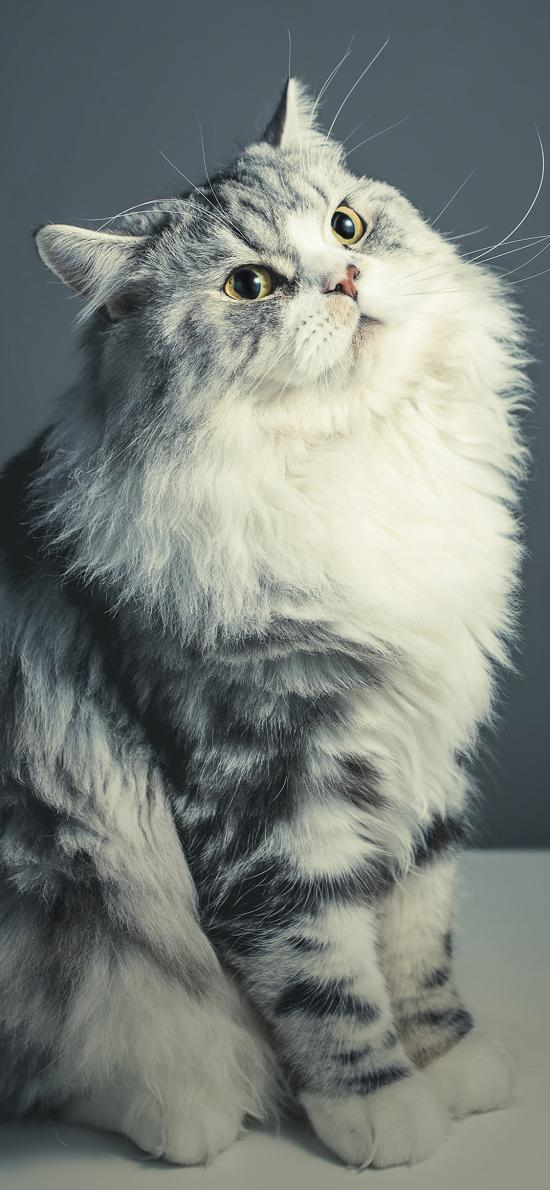 宠物猫 喵星人 大眼睛 可爱
