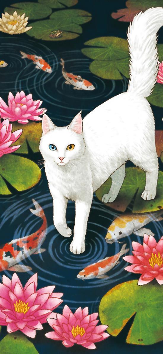 猫咪 荷塘 锦鲤 睡莲 插画 宠物