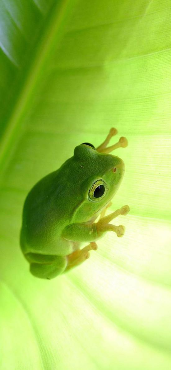 四肢 青蛙 绿色