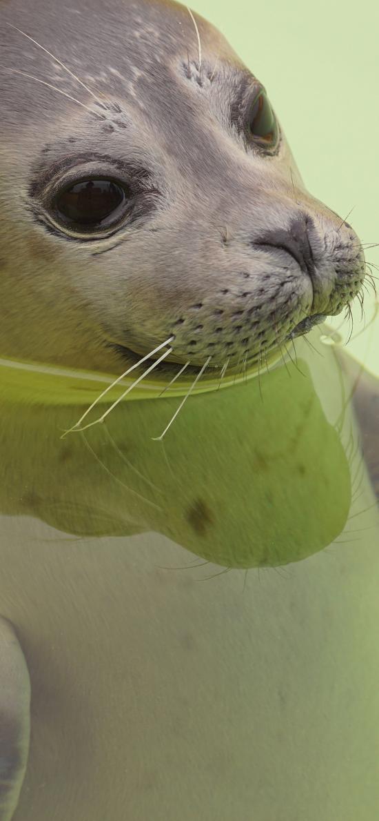 海豹 海洋生物 可爱 肥嘟嘟 水 浮游
