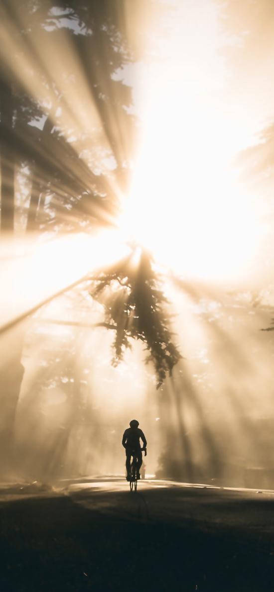 骑行 阳光 光线 自行车 单车