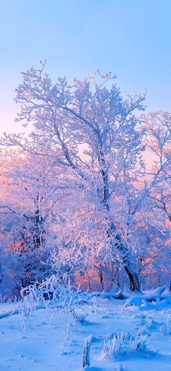 树干 白雪皑皑 景观 夕阳