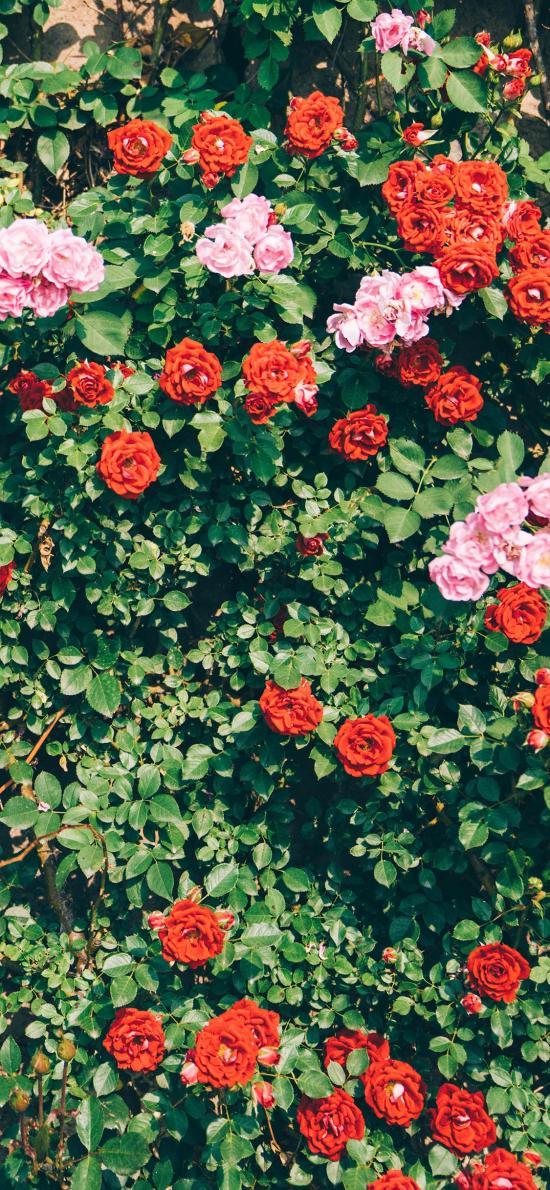 花丛 鲜花 绿叶