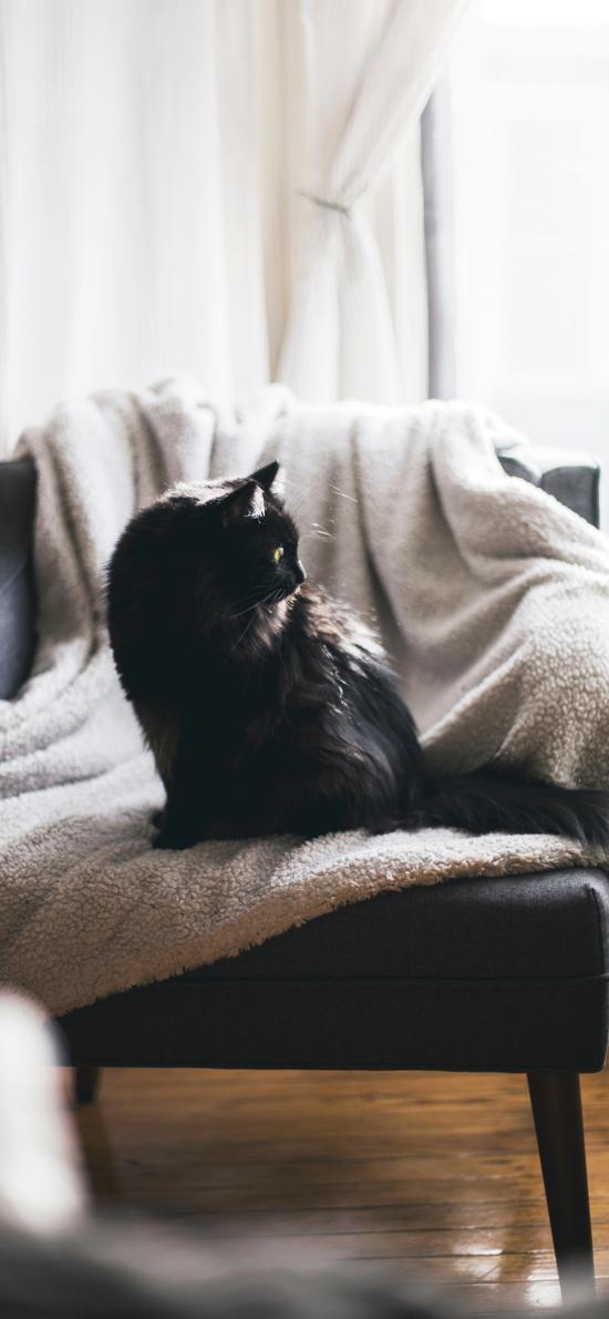 猫咪 椅子 站立 宠物