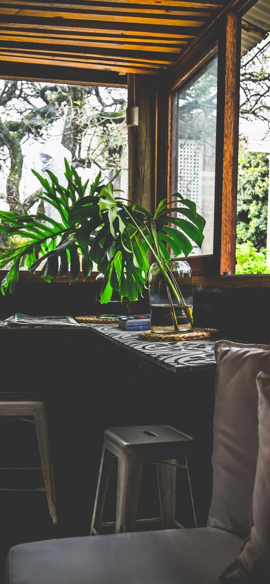 家居 盆栽 绿叶 龟背竹
