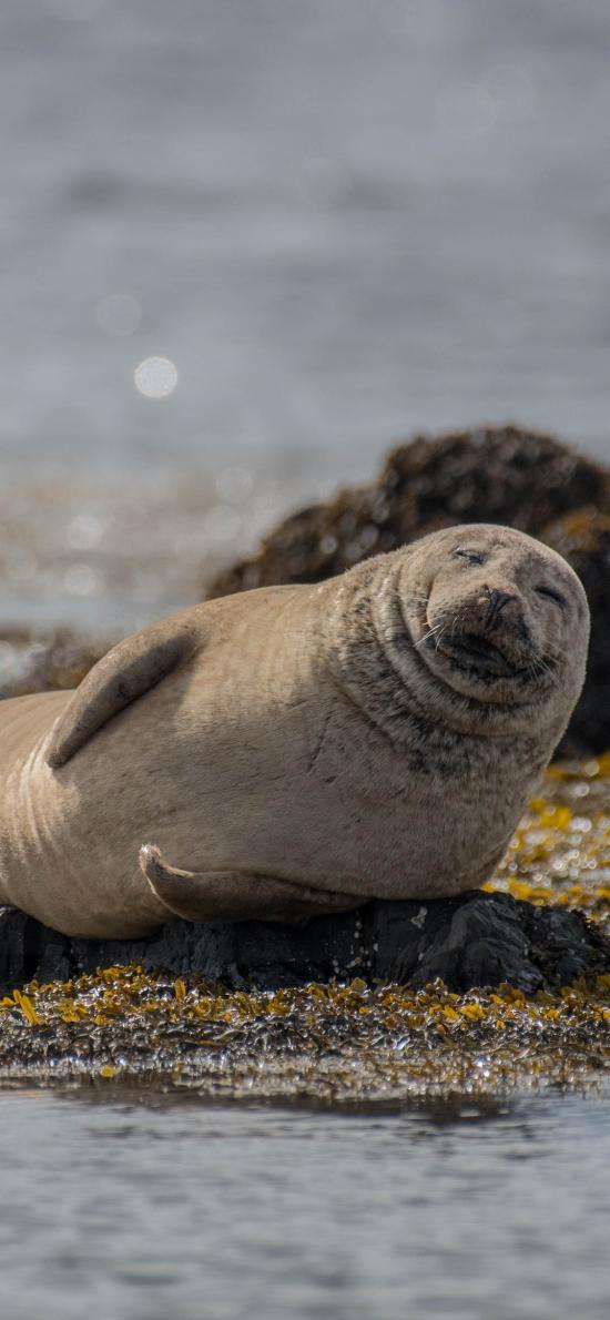 岸边 海豹 幼崽 可爱