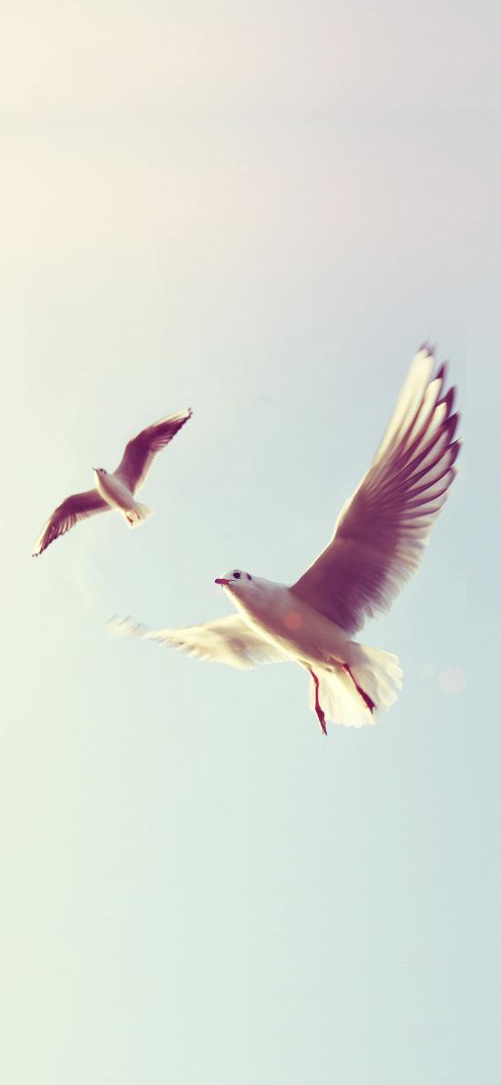 鸟 飞翔 翅膀 天空 羽毛