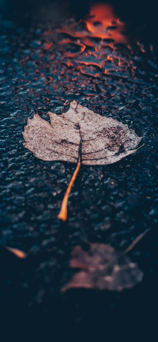枫叶 树叶 干枯 落地