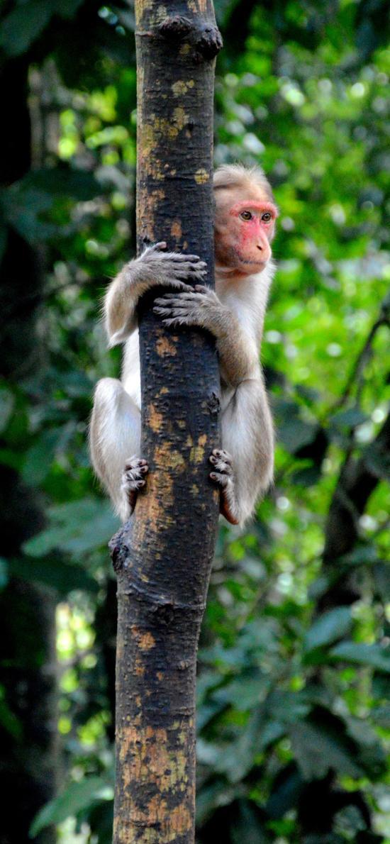 猴子 爬树 树干 野外