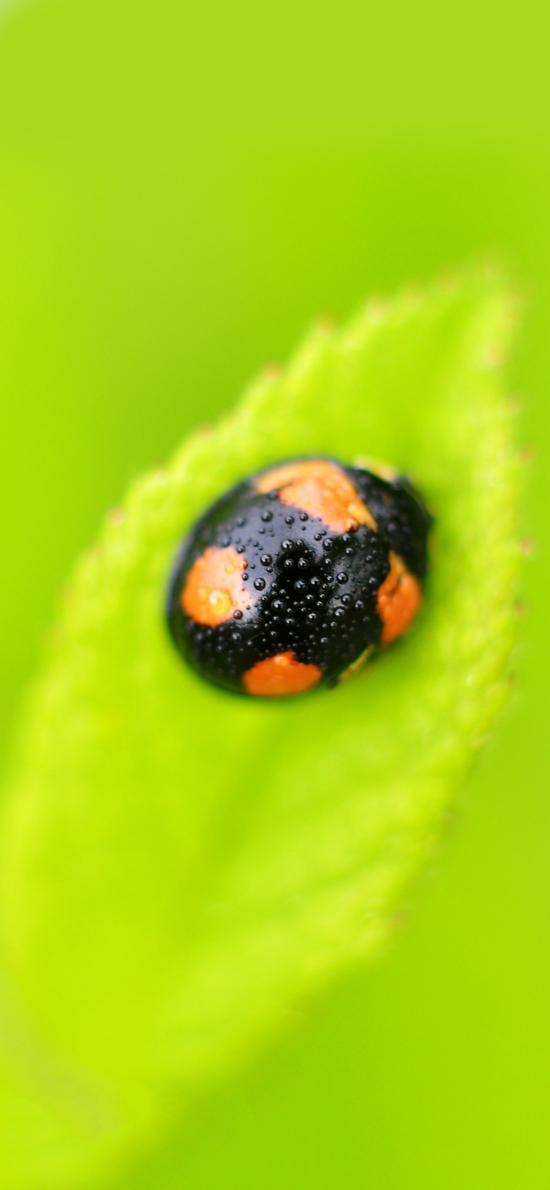 微距 甲壳虫  创意 昆虫