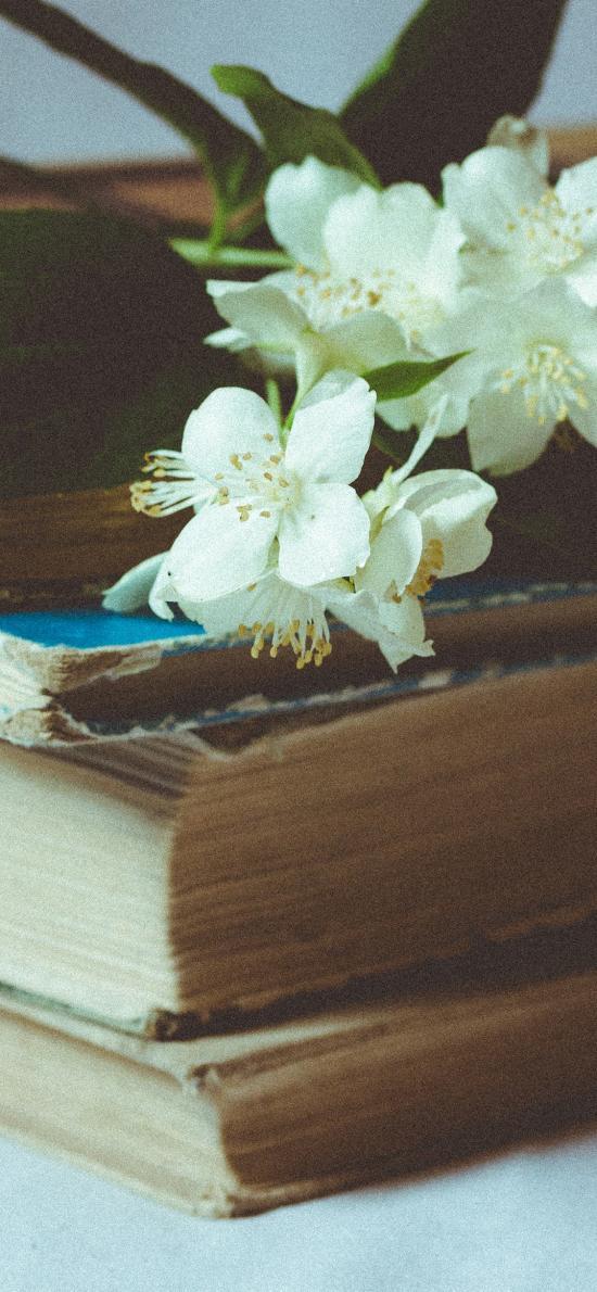 书籍 鲜花 植物 书本 老旧