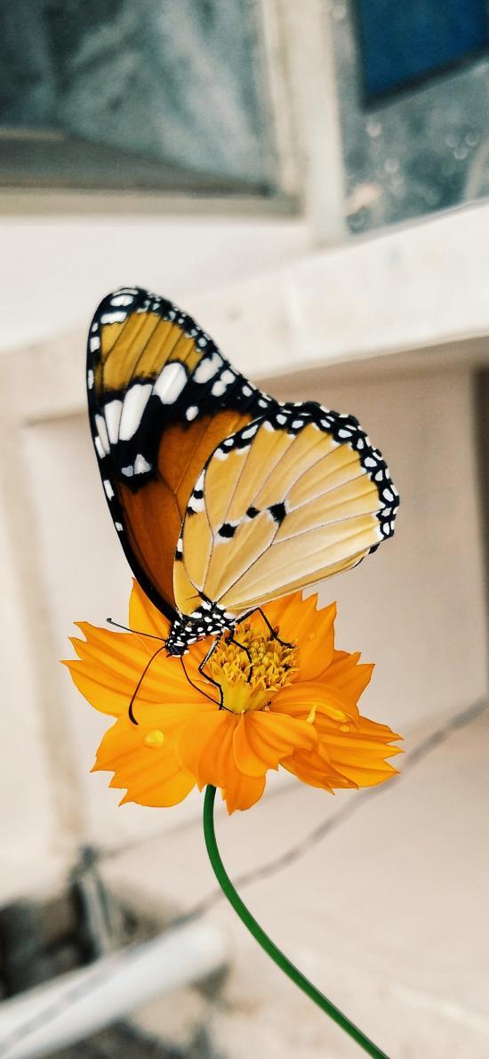 昆虫 鲜花 蝴蝶 飞舞 站立