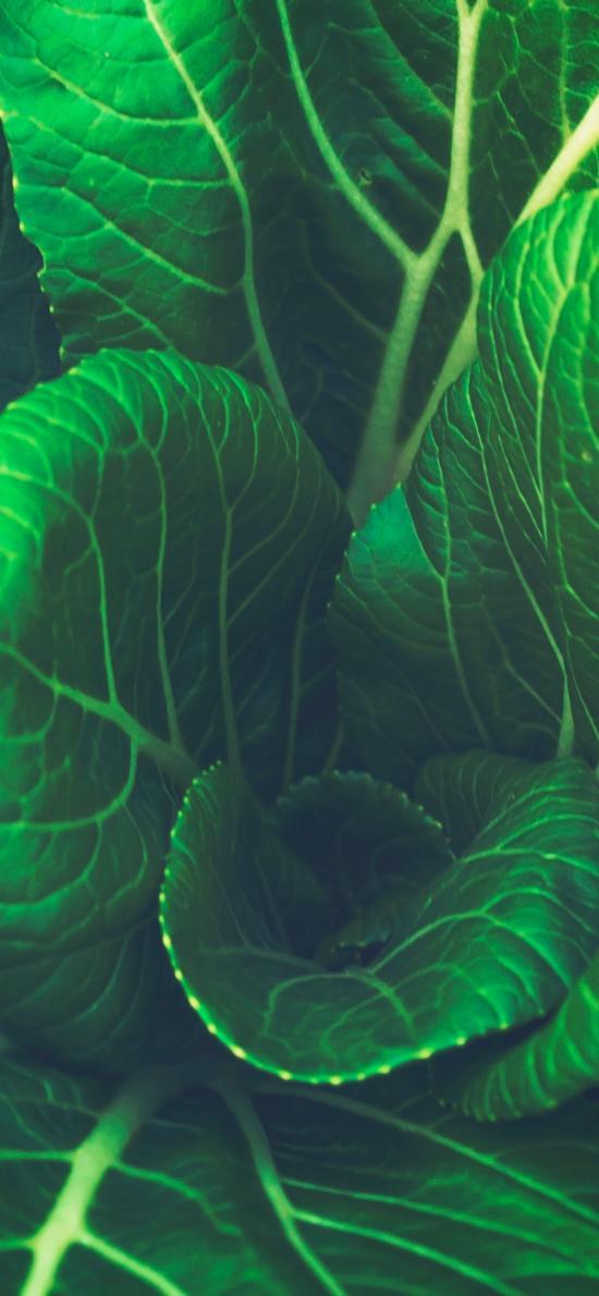 蔬菜 植物 菜叶子