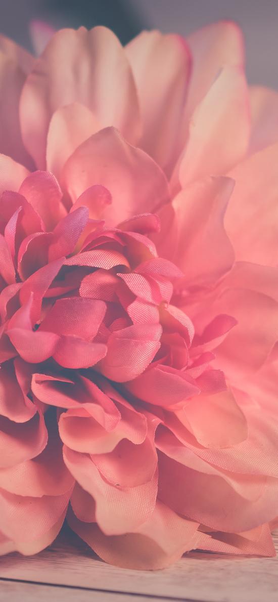 鲜花 盛开 花瓣 花蕊