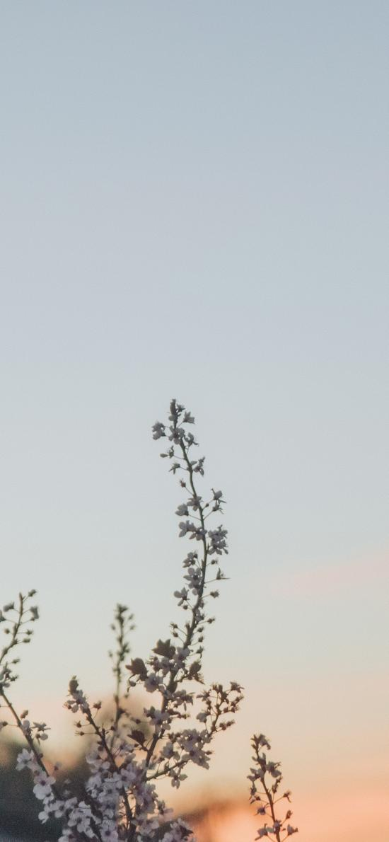 天空 枝头 小花 风景
