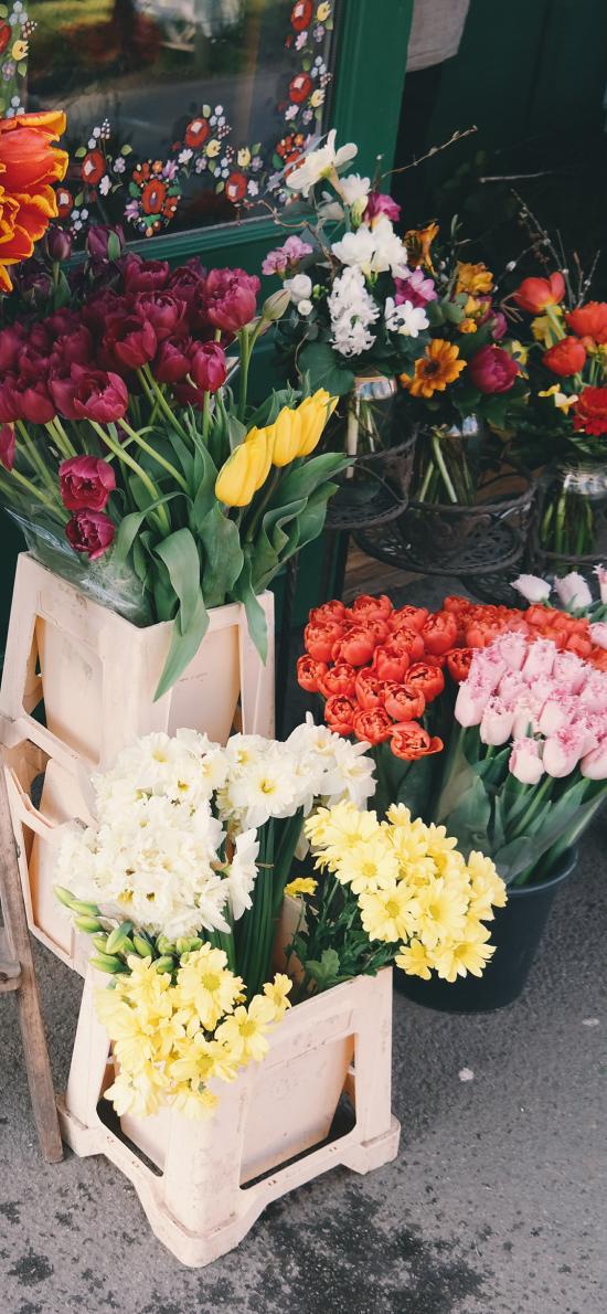 鲜花 花卉 色彩 盛开 种类