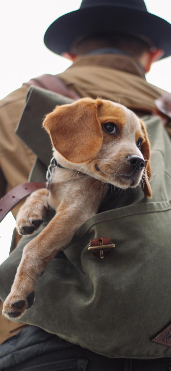 男生背影 背包 狗子 幼犬