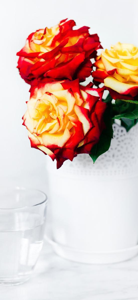 鲜花 玫瑰 盛开 花瓶