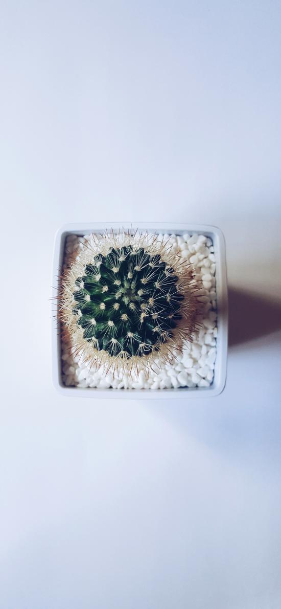 仙人掌 盆栽 石子 装饰
