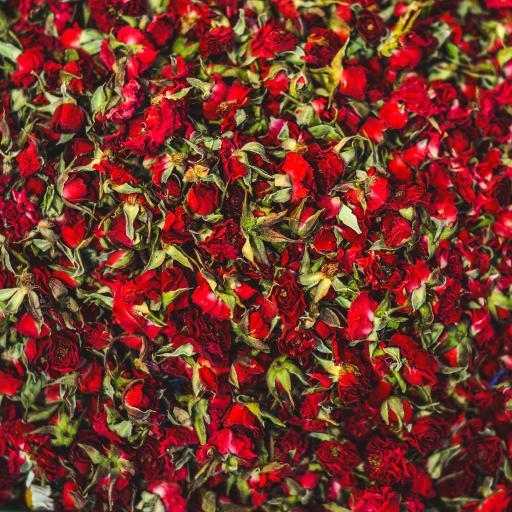玫瑰 花朵 枯萎 密集 平铺