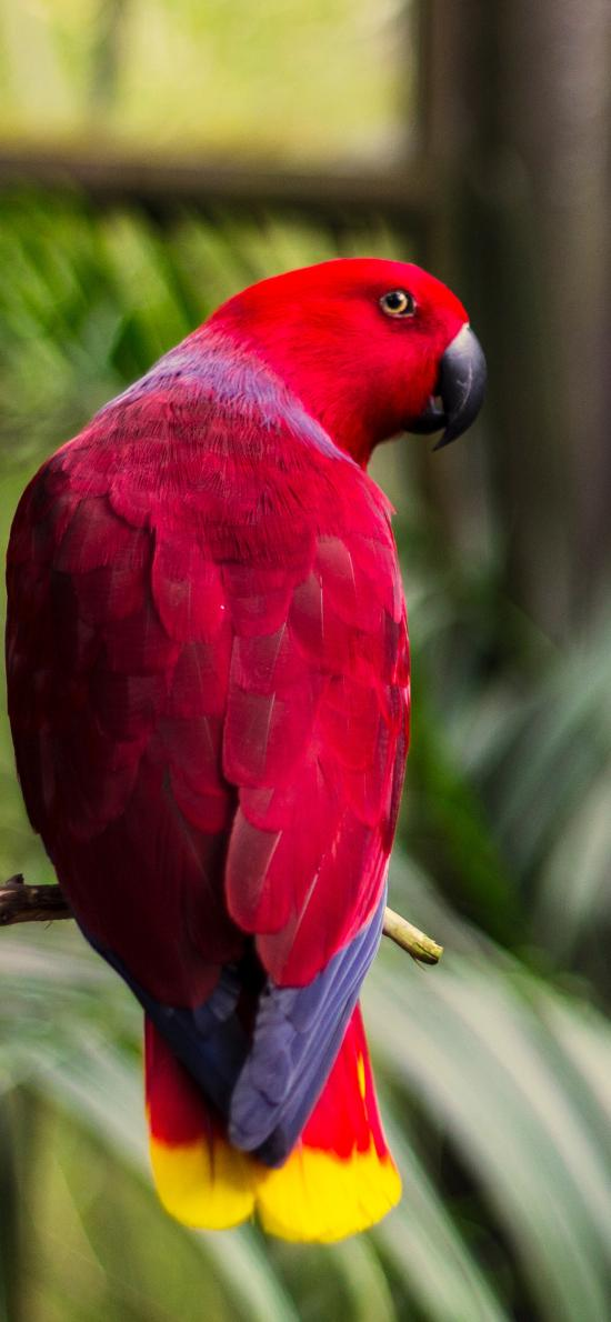 鹦鹉 鸟 飞行动物 植物园 站立 色彩 羽毛