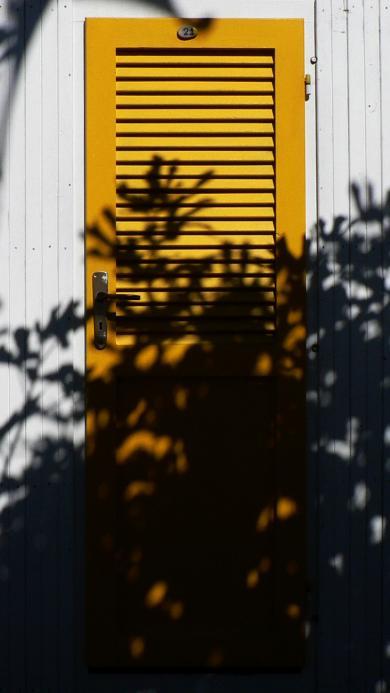 门 色彩 百叶 树木投影