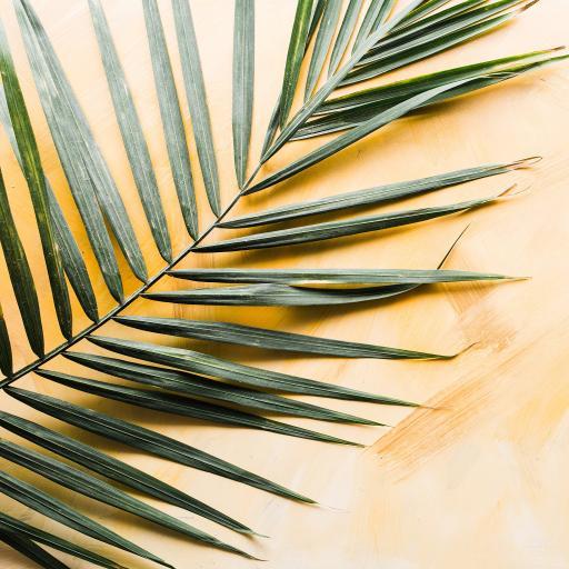 黄色背景 棕榈叶 绿植