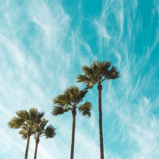 椰树 高处 天空 白云