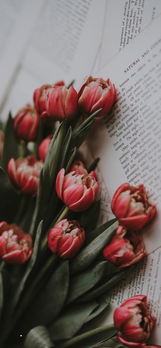 荷兰国花 郁金香 鲜花