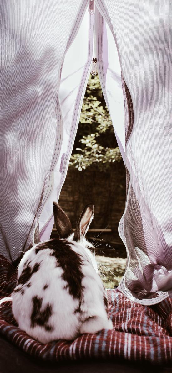 帐篷 兔子 黑白 宠物