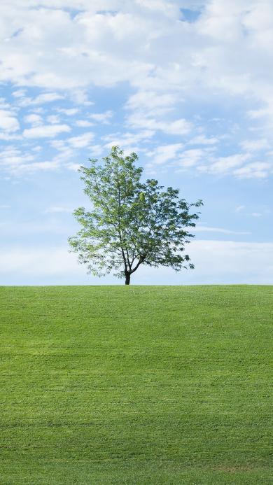 自然美景 蓝天白云 草地 树木