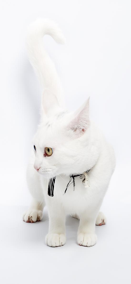 猫咪 白色 可爱 喵星人 宠物