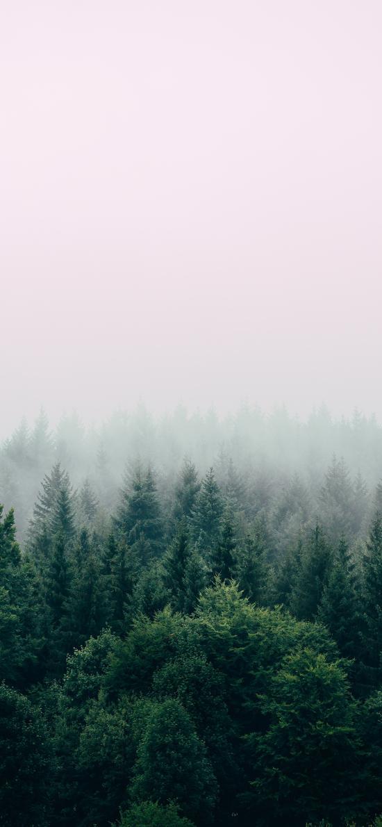 树林 森林 大自然 天然氧吧 树木