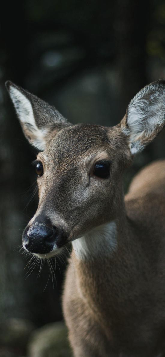 鹿 户外 树林 大眼